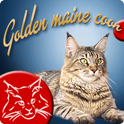 Golden maine coon